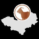 LaNOOS - Kaschmirwolle Mongolei