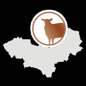 LaNOOS - Schafwolle Mongolei